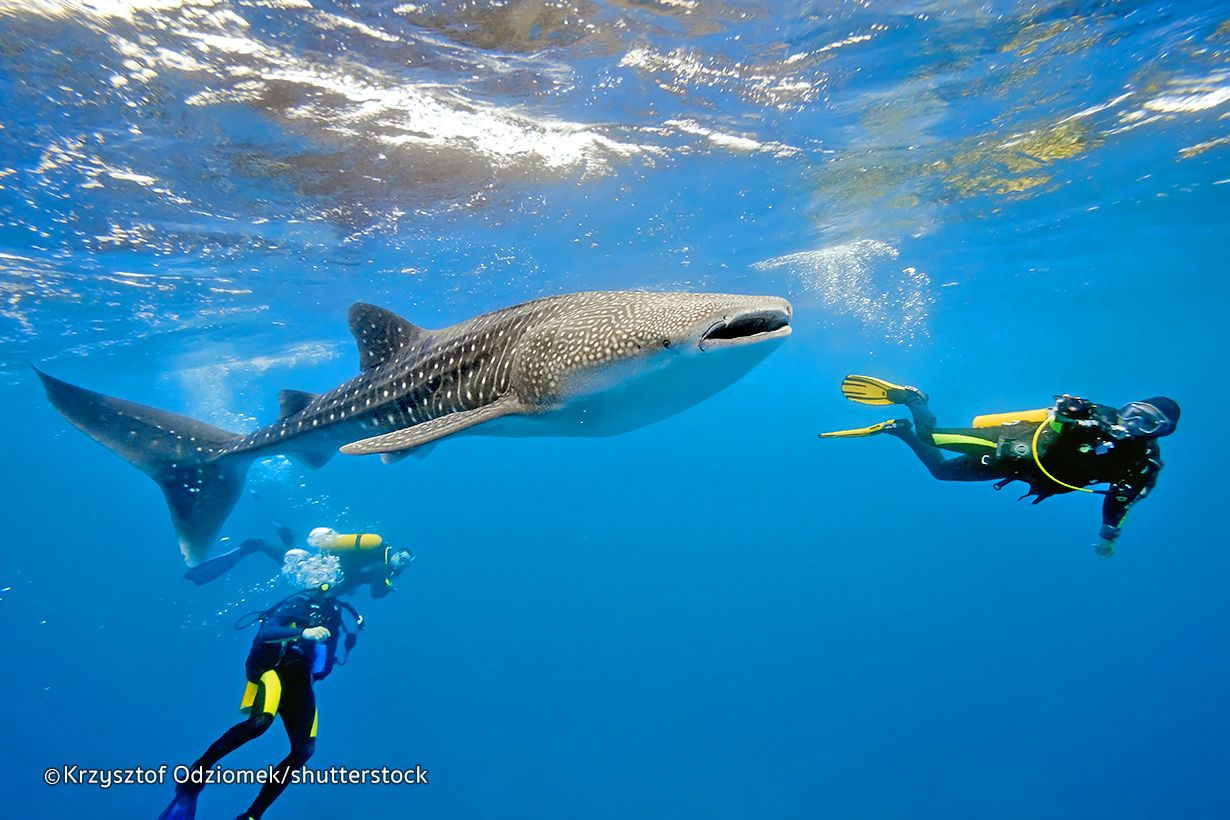 The scuba diving around phuket thailand is pretty impressive the scuba diving around phuket thailand is pretty impressive with some great sites available xflitez Images