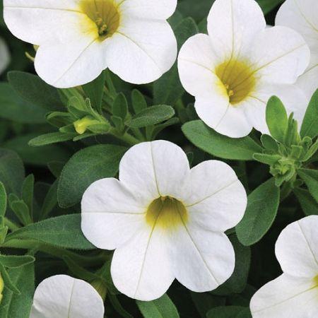 Pin On Floral Splendor