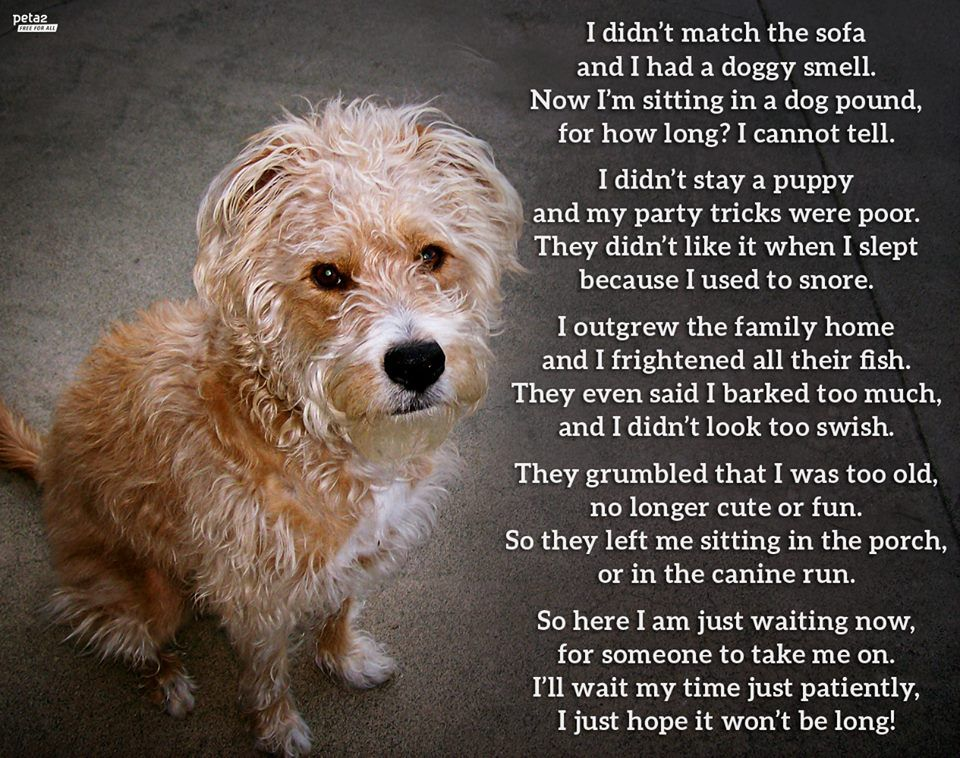 PHOTO Animals Are For Life animals dogs poem aww