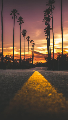 Palm tree sunset road iphone wallpaper iphone and android wallpapers in 2019 pinterest - Palm tree wallpaper for android ...