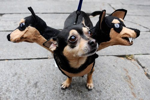 crazy dog costumes & 20 Crazy Dog Costumes You Would Love To Put On Your Pooch ...