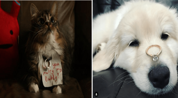 Best Proposal Ever 14 Precious Pets Who Helped Their