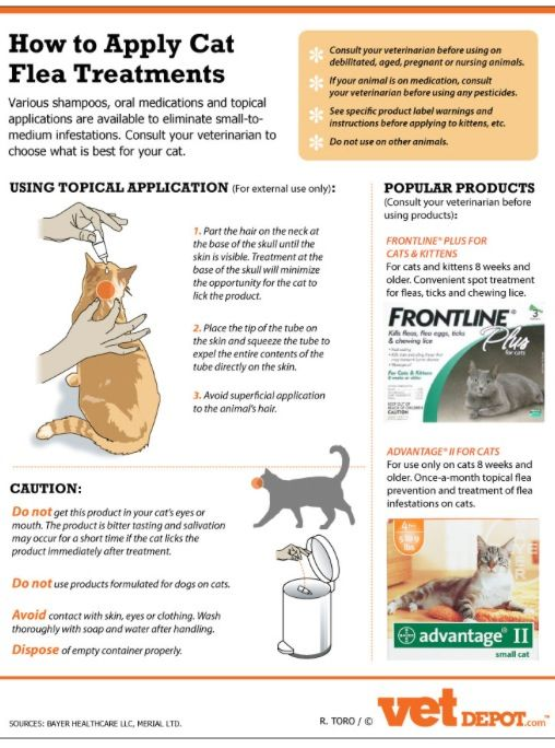 Learn More About Cat Flea Allergies And Flea Treatments In The