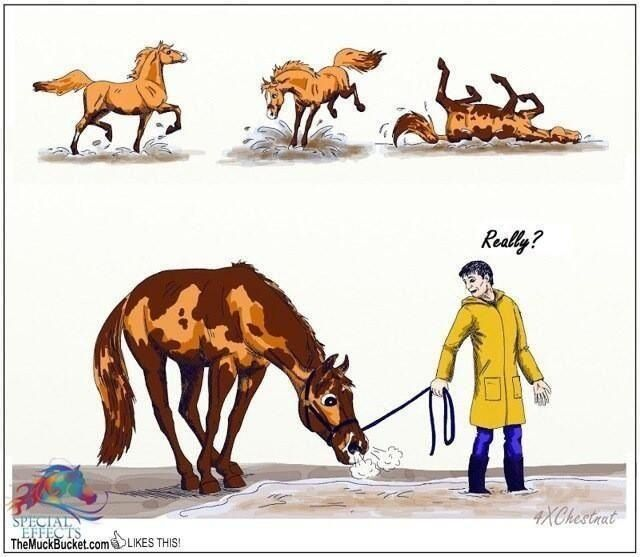 After you give your horse a bath.