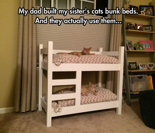 Has to be a photoshop, cats never use the things you buy or make specifically for them!! ;) ;)