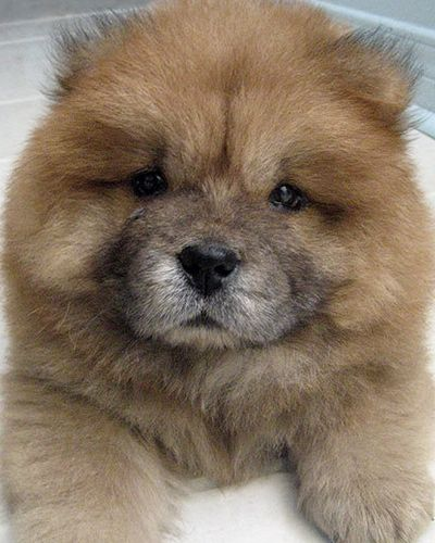 The 10 Most Aggressive Dogs By Breed Cute Dogs Puppies Cute