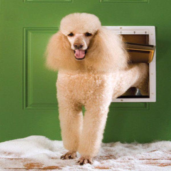 Petsafe Extreme Weather Pet Door Large Doggy Doors Pinterest