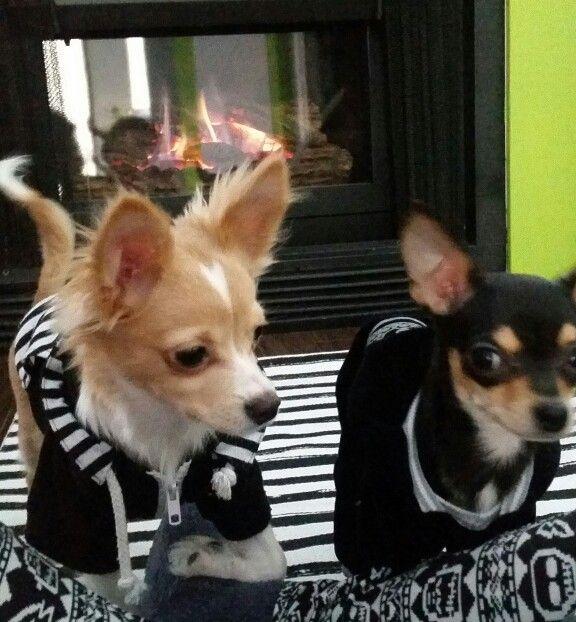 Cariño and Mojito