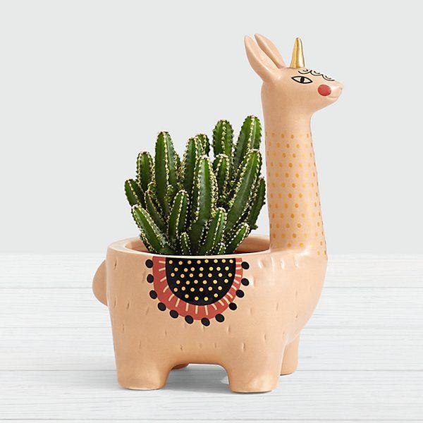 Photo of Llamacorn Cactus Plant