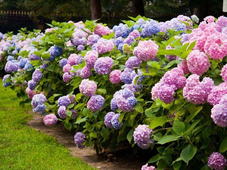 Plantas de sombra 9 opciones para el jardín Mixers
