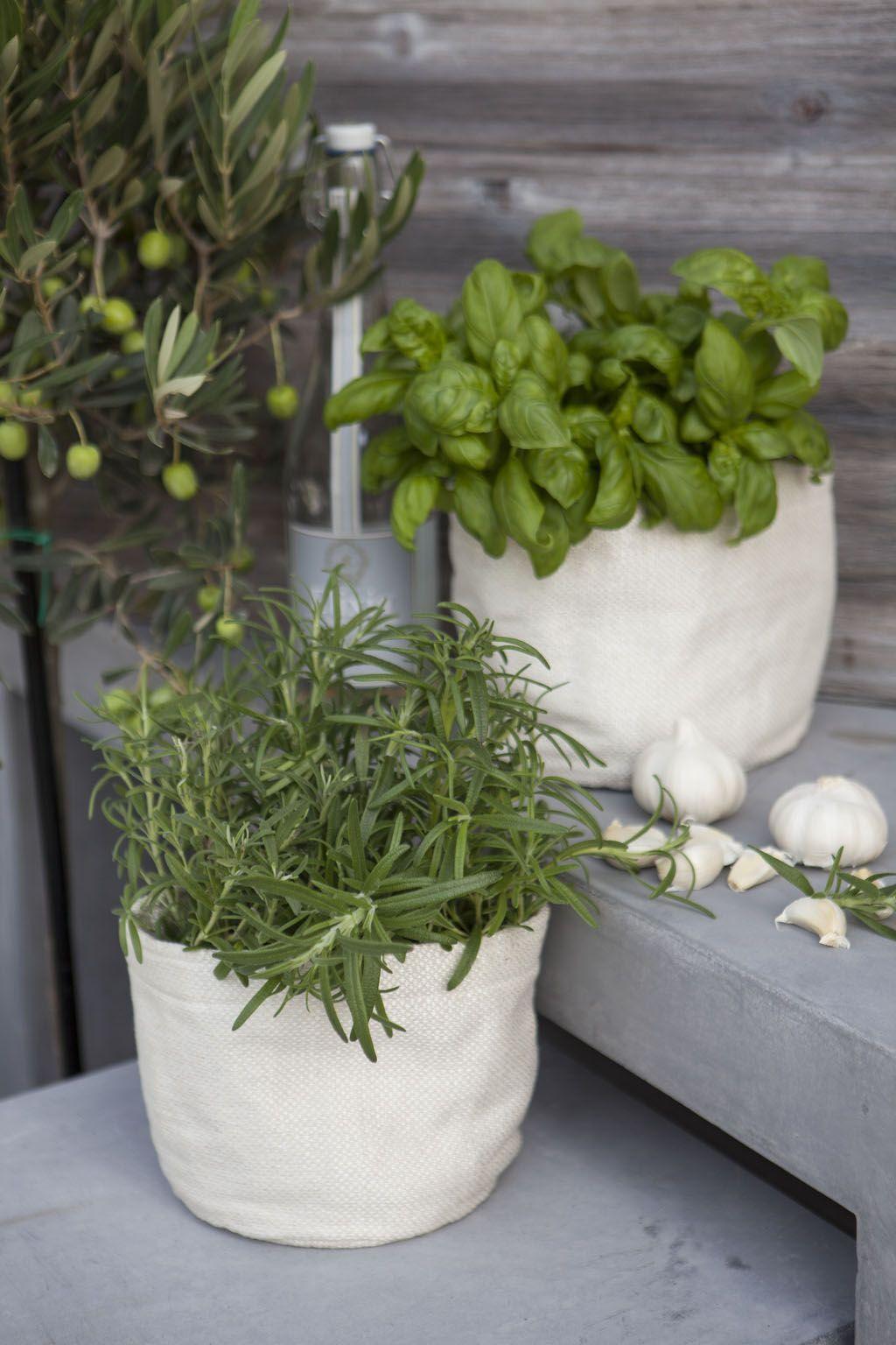 Krydderurter trives ekstra godt i grow-in selvvanningspotte.