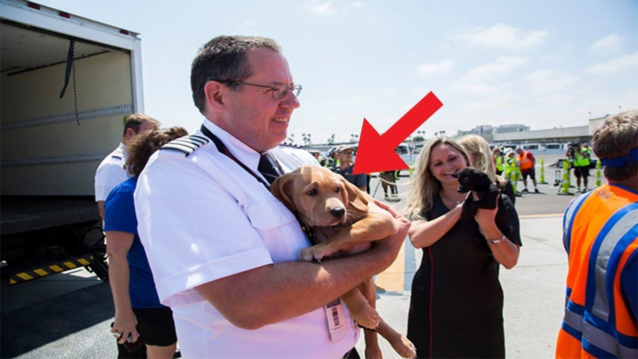 Southwest Airlines Fills Cabin With Pets Orphaned During Houston