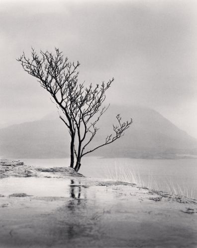 Michael Kenna Photography Trees