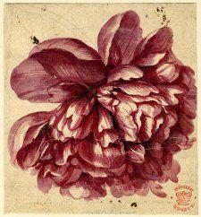jan van huysum. Beautiful bloom