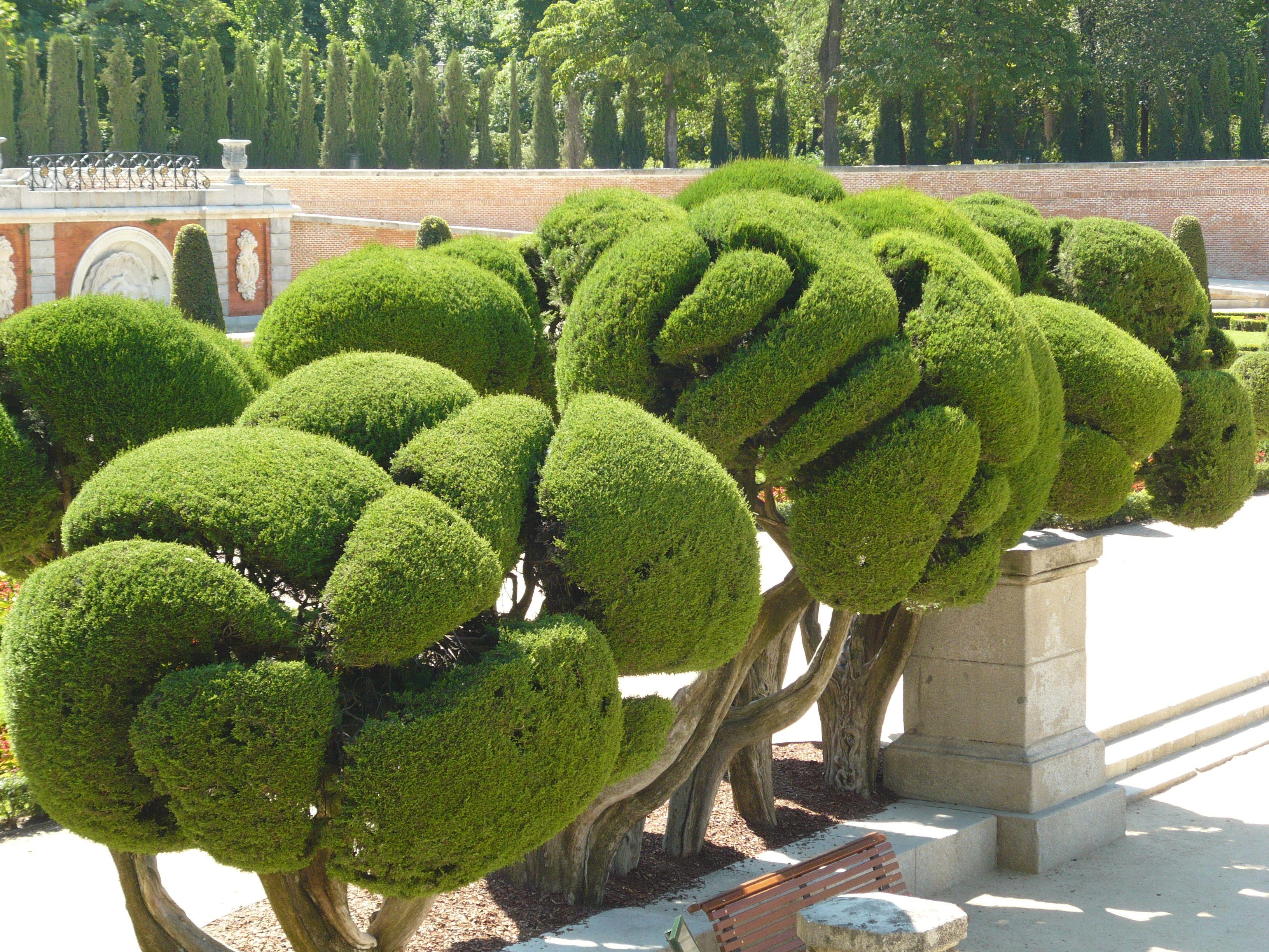 Formschnitt Kegel Buchsbaum landscape Pinterest