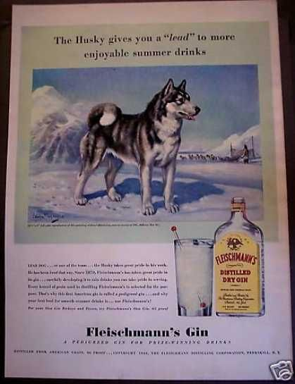 Vintage Dog Picture Siberian Husky