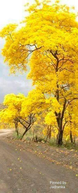 Impressionen in gelb...