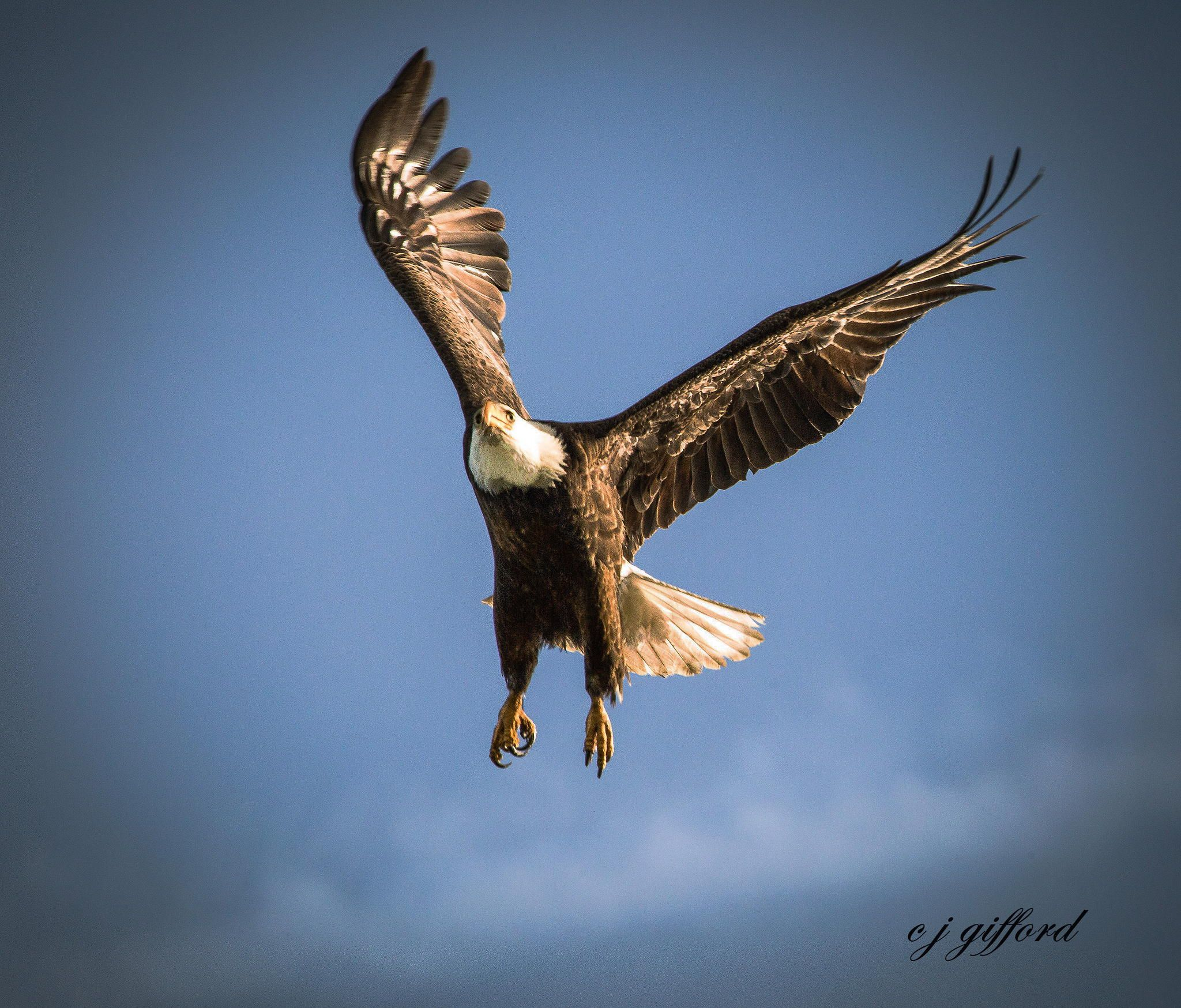 Landing Gear in Place by Connie  Gifford on 500px