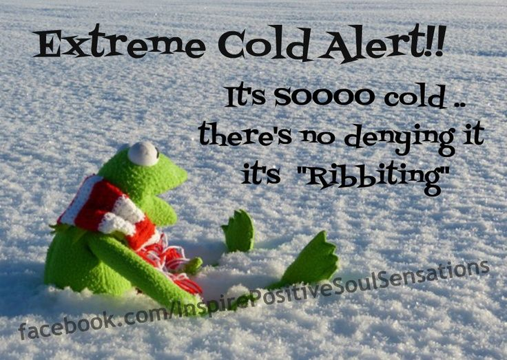 So Cold Quotes - Bing Images   Cold weather funny, Funny ...