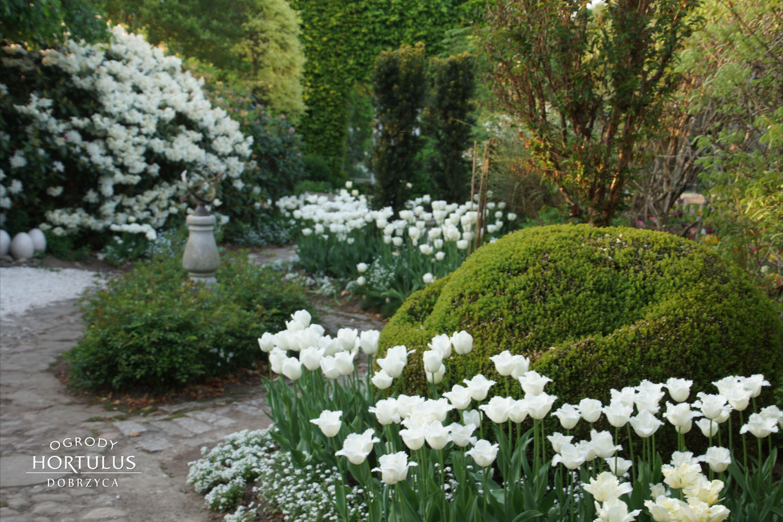 Ogrod Bialy Romantyczny Ogrod Tulipanow Biale Tulipany Ogrod Romantyczny Hortulus Plants