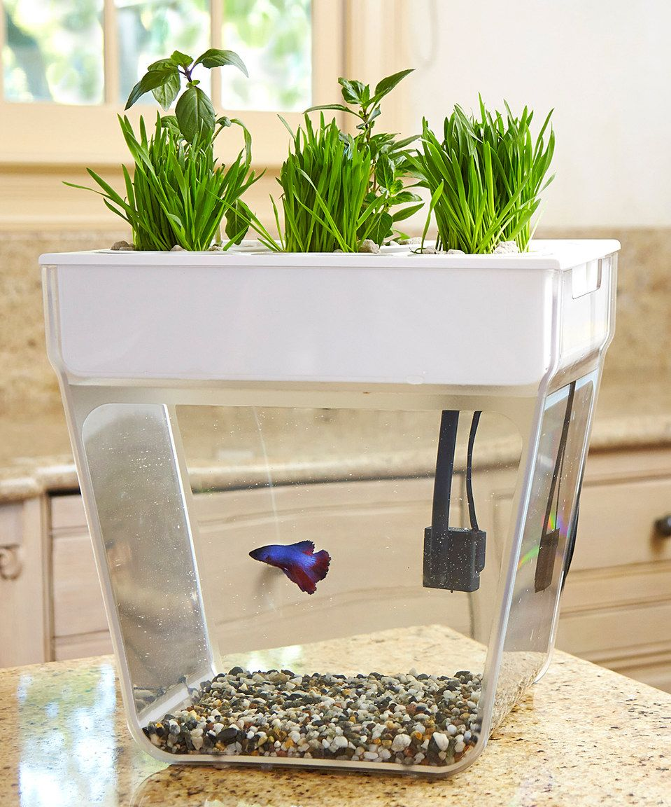 love this aqua farm self-cleaning fish tankback to the roots