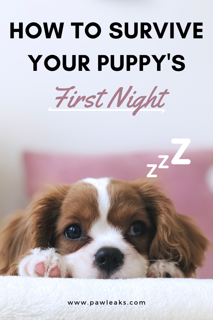 How To Survive Your Puppy S First Night At Home Getting A Puppy Dog Training Cute Puppy Breeds