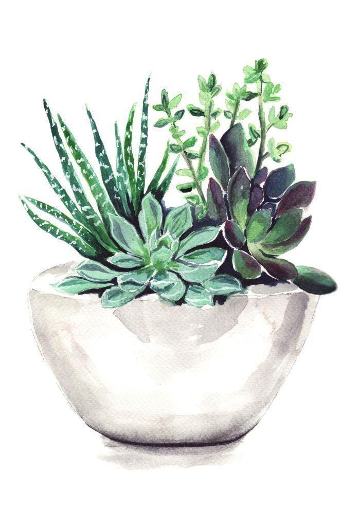 Vetplanten Kunstdruk van Bridget Davidson Watercolor ...   - Aquarell | watercolor -