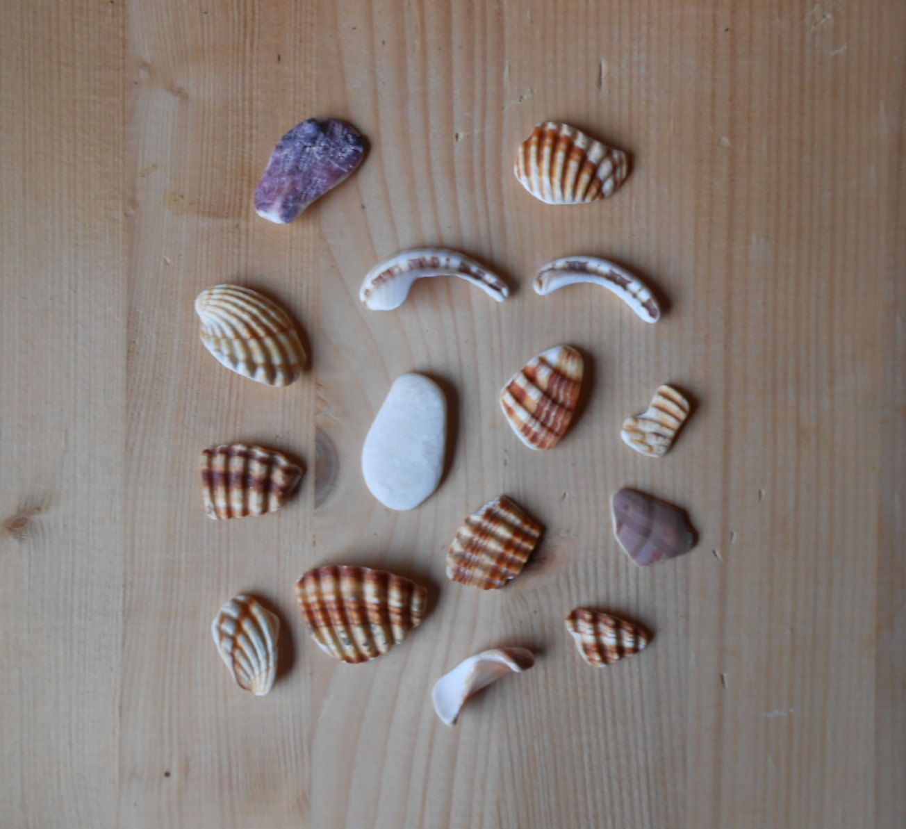 Shell fragments, craft supply, 15 pieces, jewelry supplies, surf tumbled shell fragments C19 di lepropostedimari su Etsy