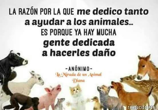 Animalista!!!!!!!!!!