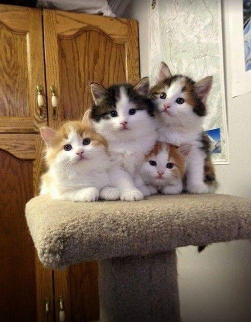 Inbaddad Katter Och Kattungar Sota Djur