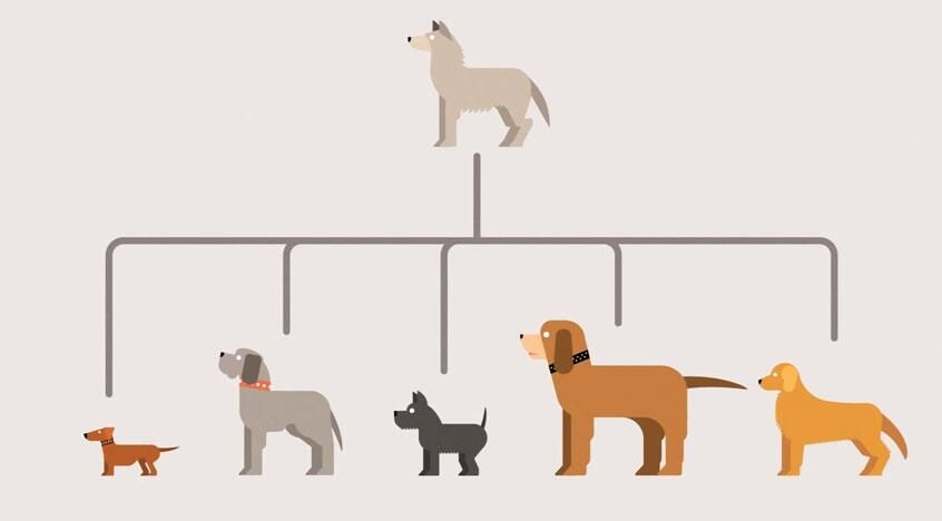 How evolution works, animated in minimalist motion graphics http://j.mp/1k987UP  pic.twitter.com/P4cHC0abQ8