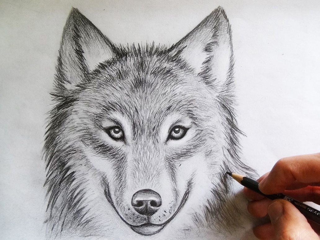 Best wolf drawing ever