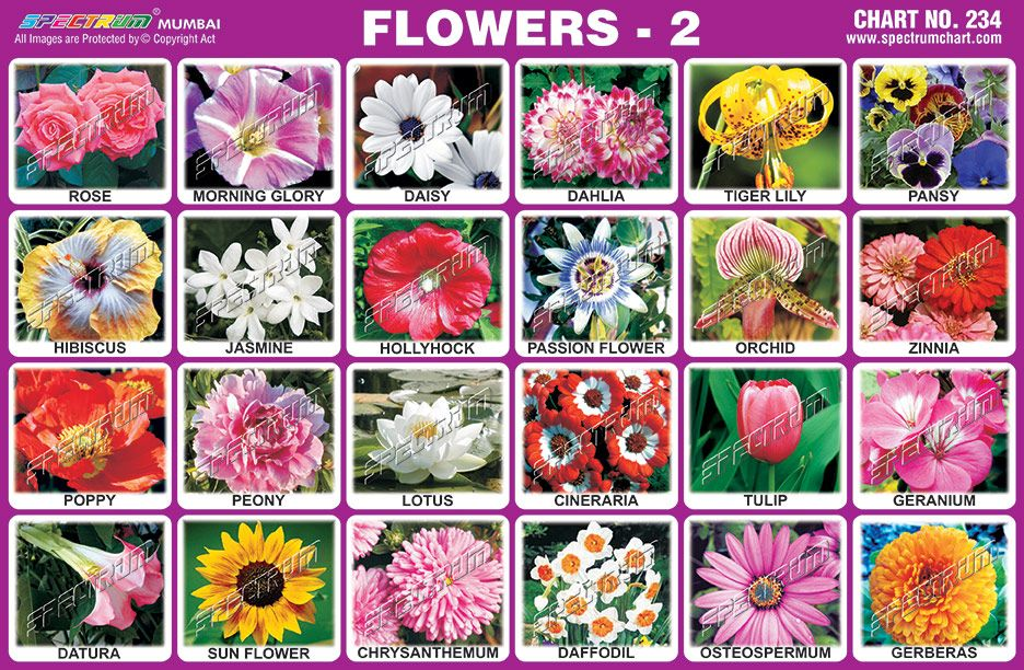 S P E C T R U M Spectrum Charts .. Flower names
