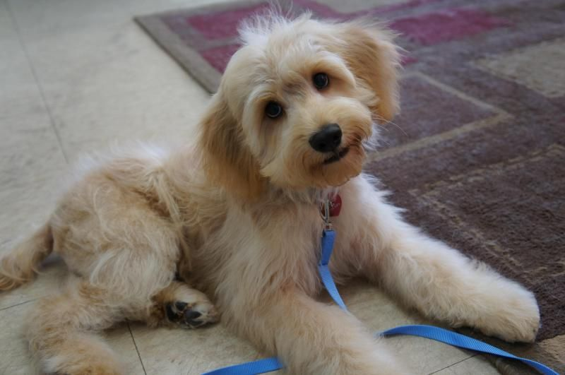 Adopt ranger on petfinder dog adoption adoption cute dogs