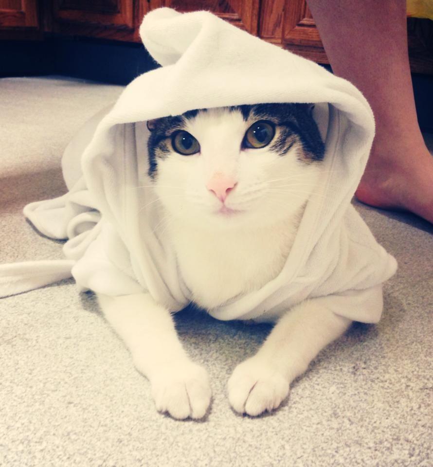 Cat in a bathrobe, how cute!