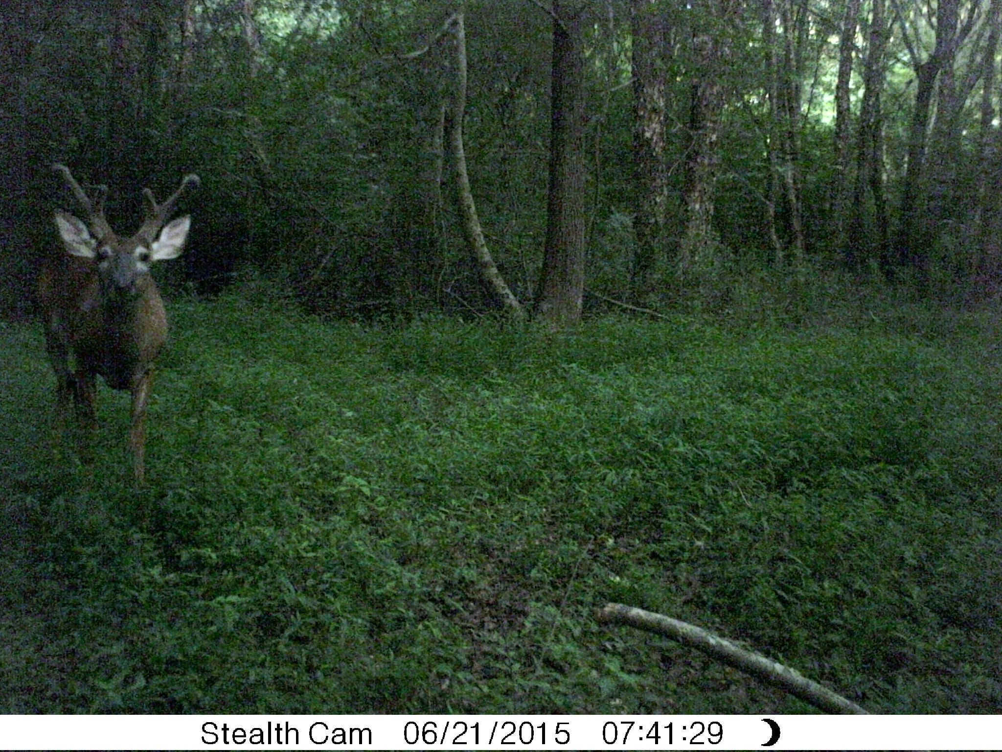 How to Plant a Small, Cheap Food Plot Food plot, Food