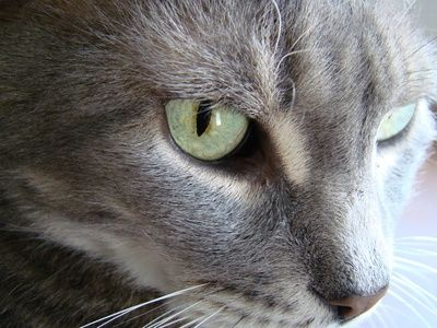 How To Get Rid Of A Cat S Yeast Infection Cat Urine Smells Cat Urine Cat Urine Remover