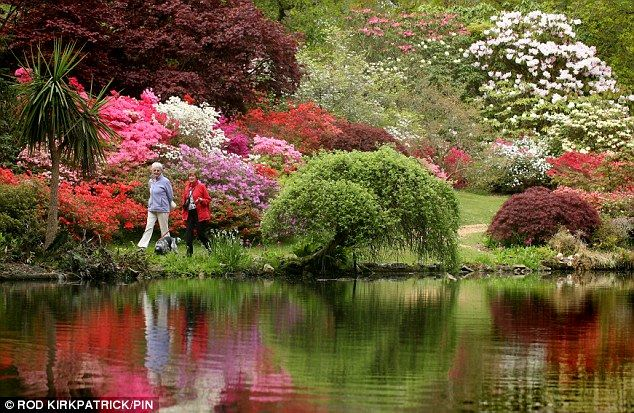 Blooming Lovely At Last Britain Set For Week Of Sunshine As Ice Cream Weather Arrives Azaleas Garden Front Yard Landscaping Design Highland Park Dallas