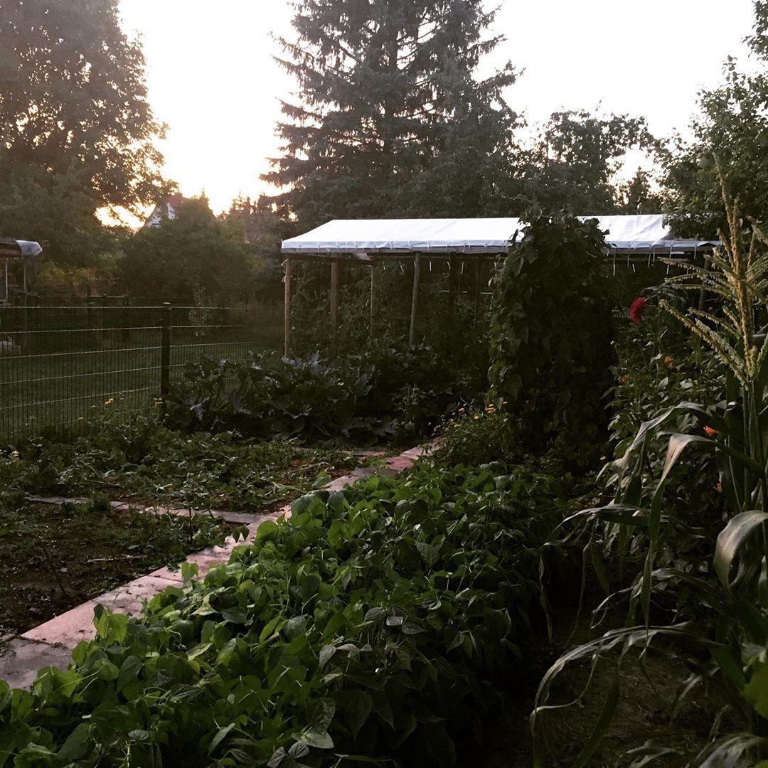 Abendstimmung Im Gemusegarten Sfs Gartnern Meingarten Meinschonergarten Garten Garten Deko Garten Garten Ideen