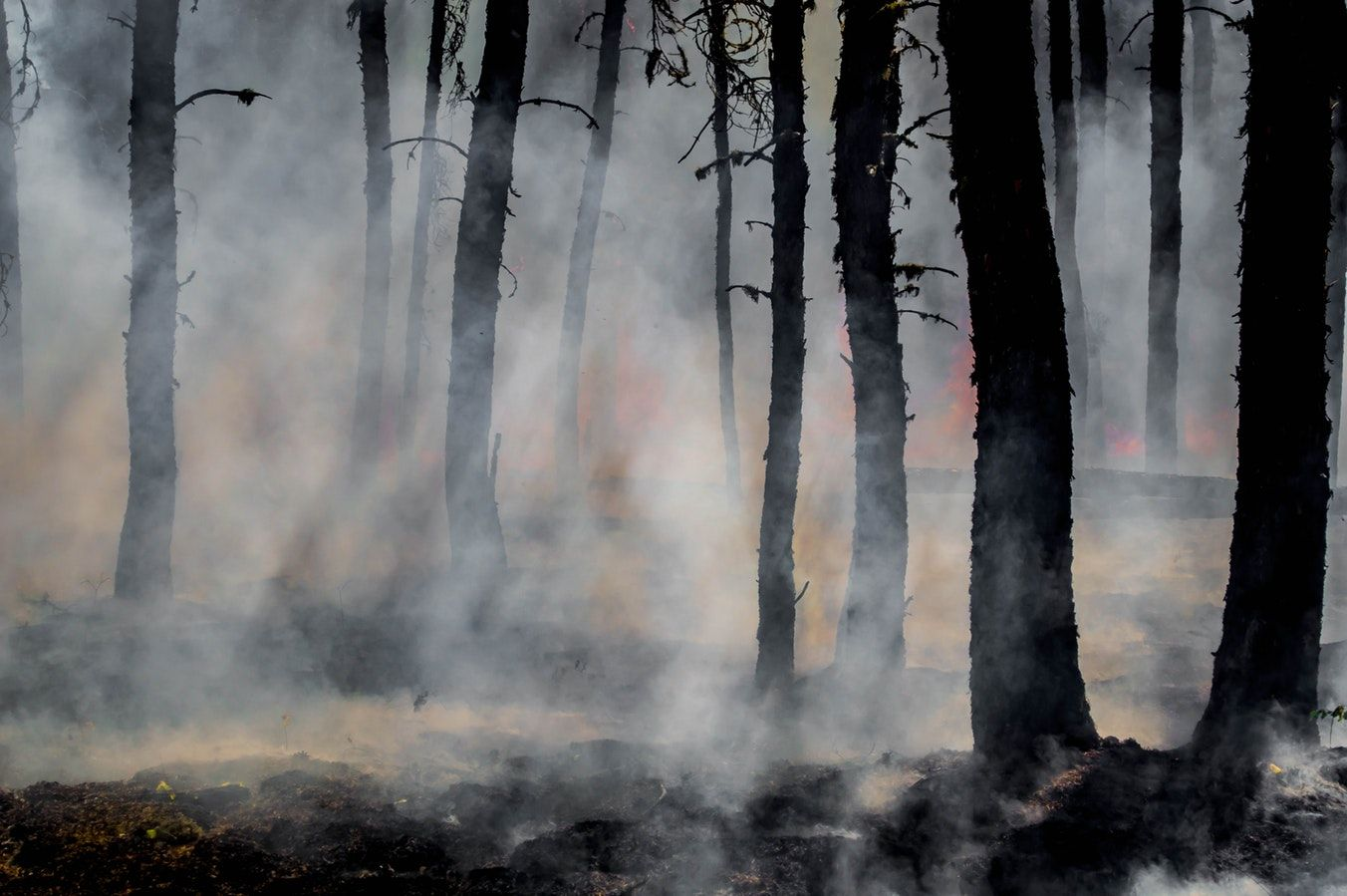 Wildfire Season Tips & Products Forest wallpaper, Nature