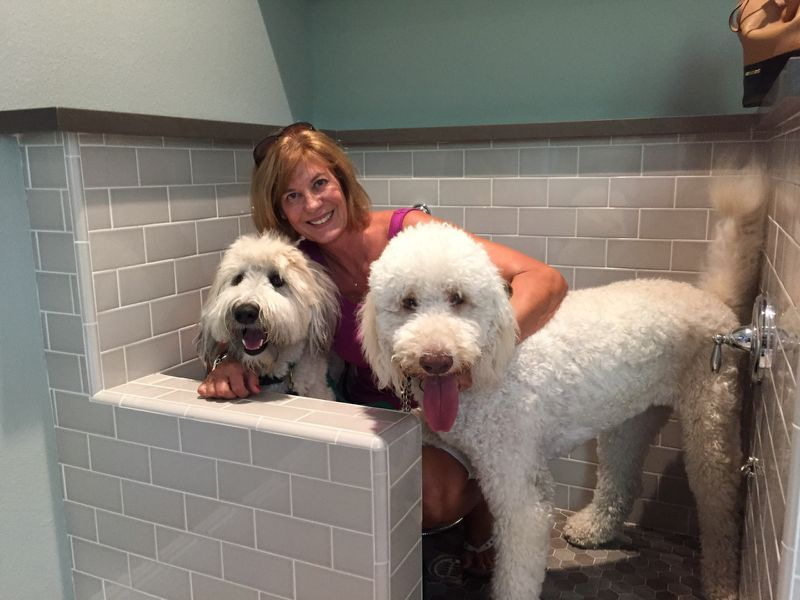 Trendy New Builtin Home 'Pet Suites' Are the Ultimate Way