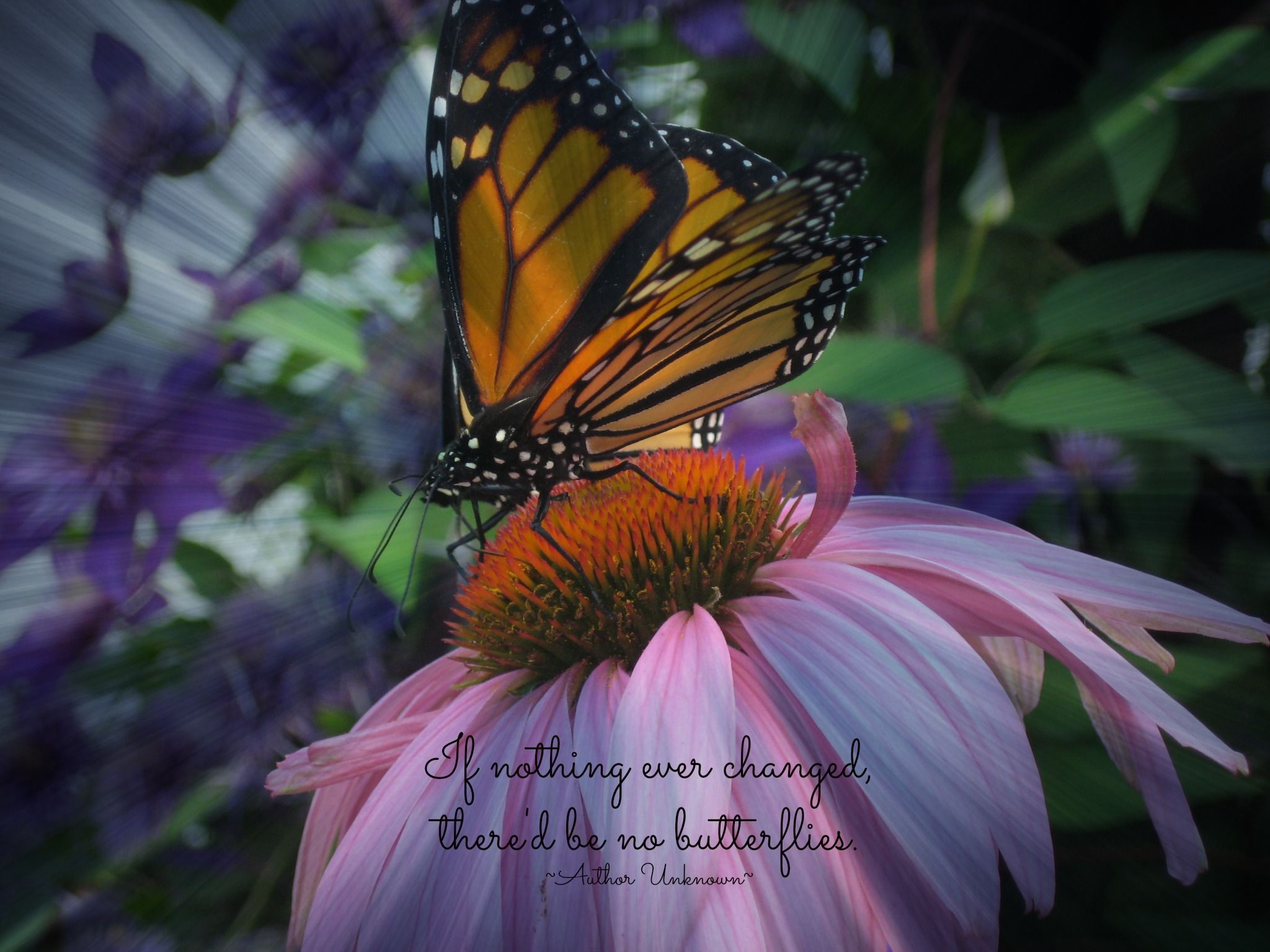 Hearts and Butterflies christian verses Butterfly Poems