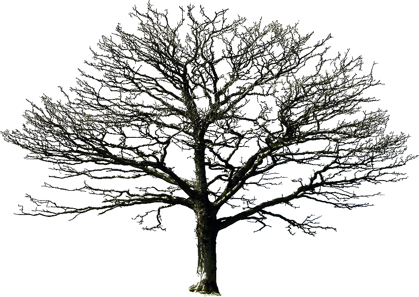 Bare Tree Png By Doloresminette On Deviantart Photo Encaustic Photoshop Nature Bare Tree