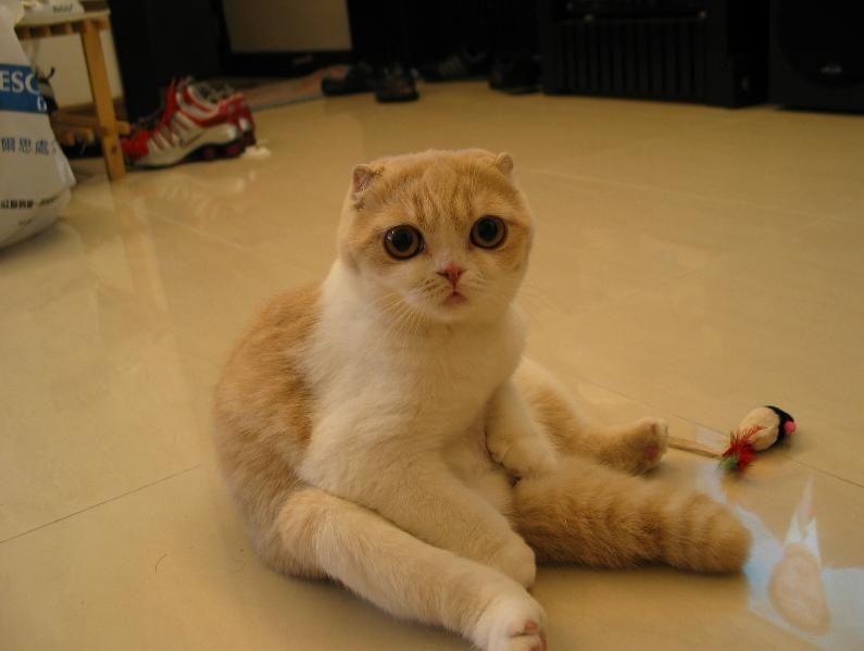 No one - short-ear-cat.jpg