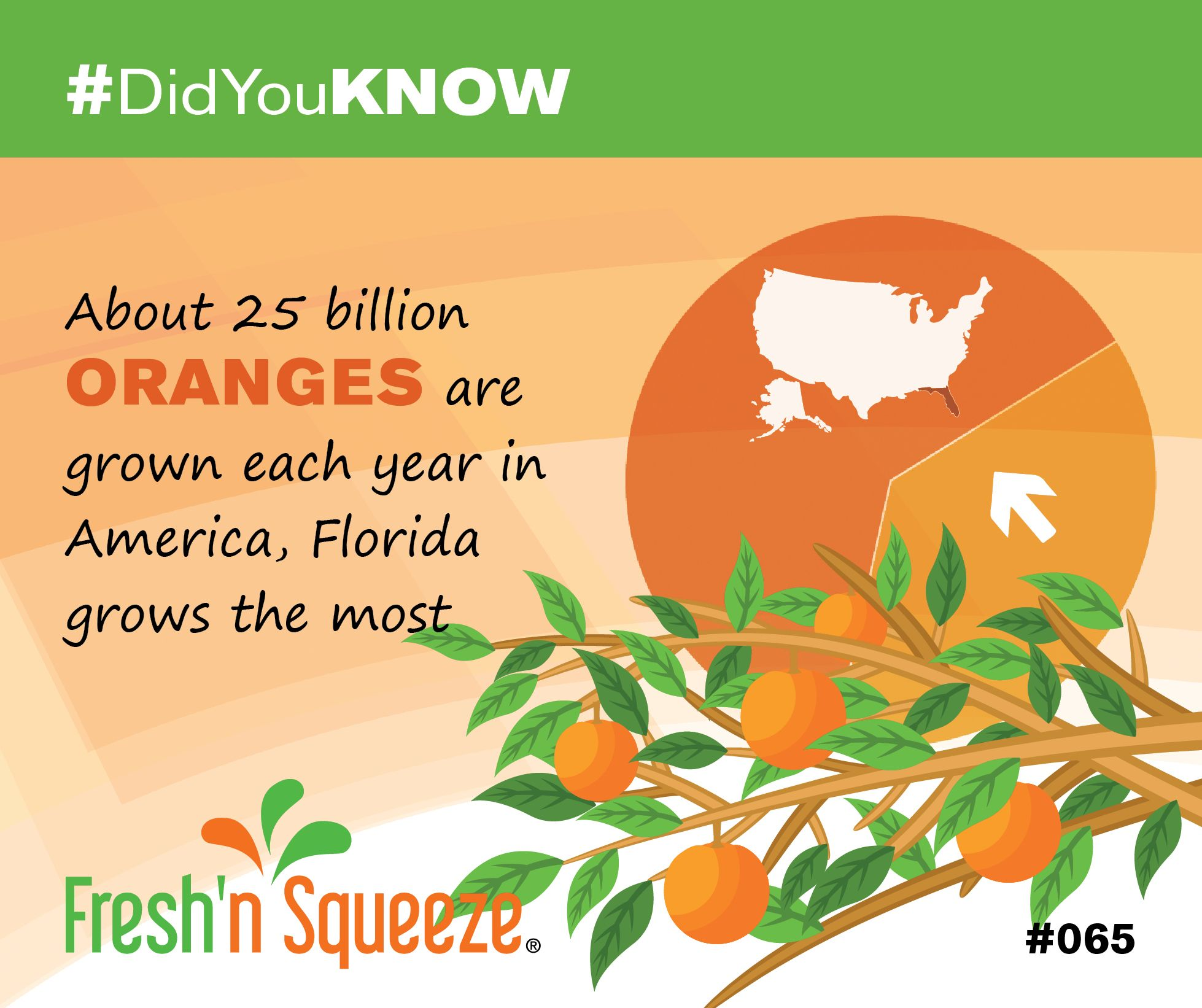 DidYouKnow 🍊 About 25 billion oranges are grown each year