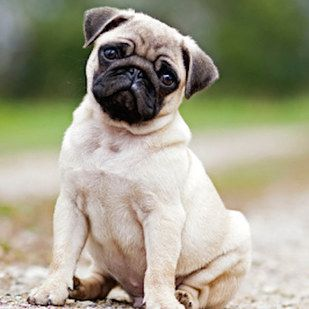 21 Food Inspired Dog Names That Are Actually Really Cute Baby