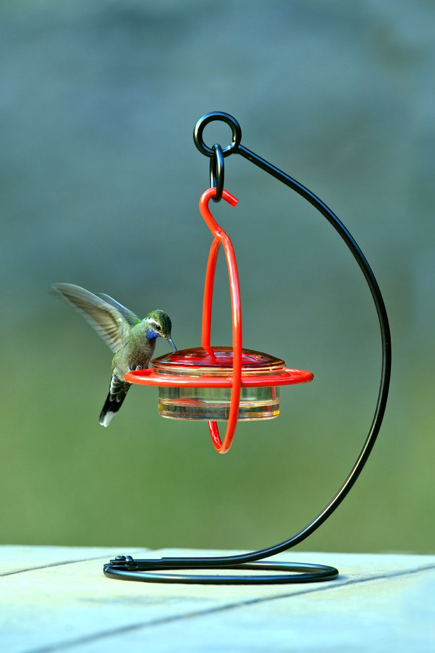 Stand alone glass hummingbird feeder Humming bird