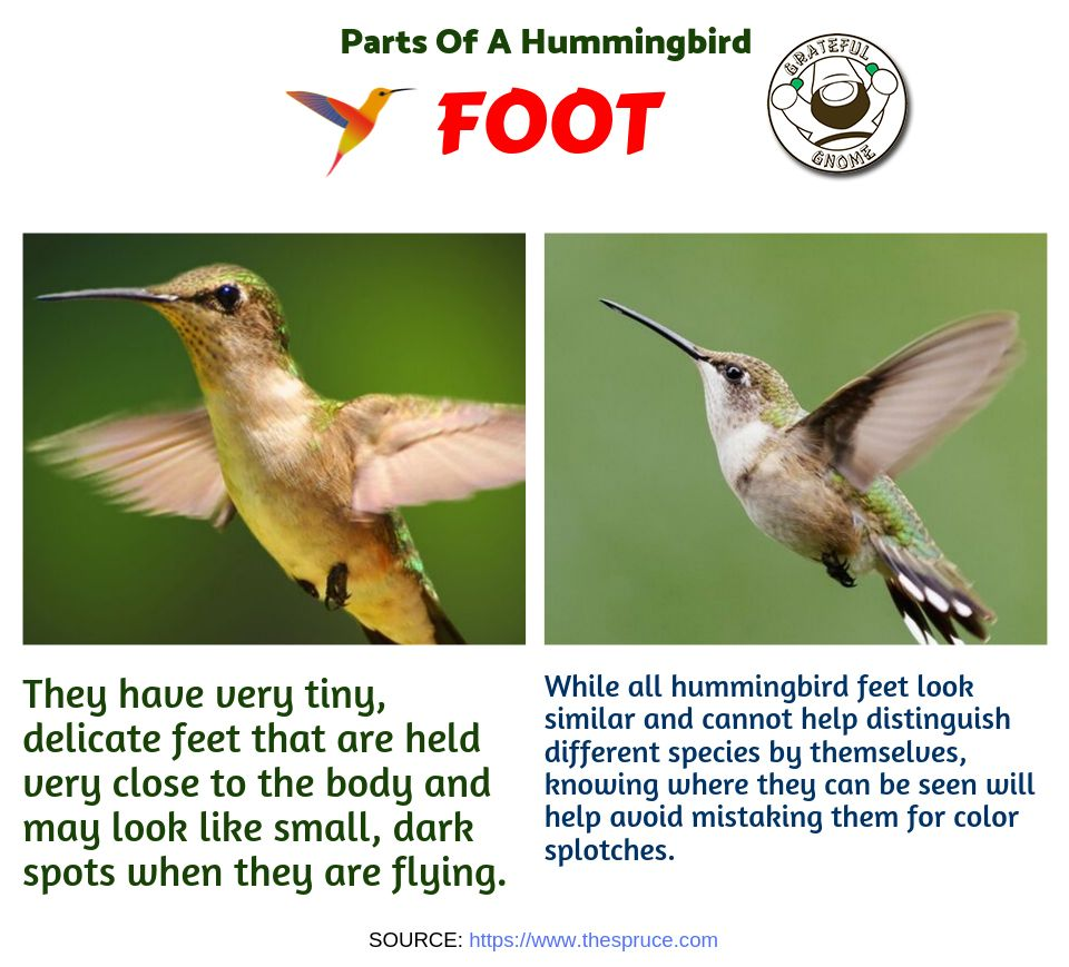 Learn how to identify these wonderful creatures by knowing