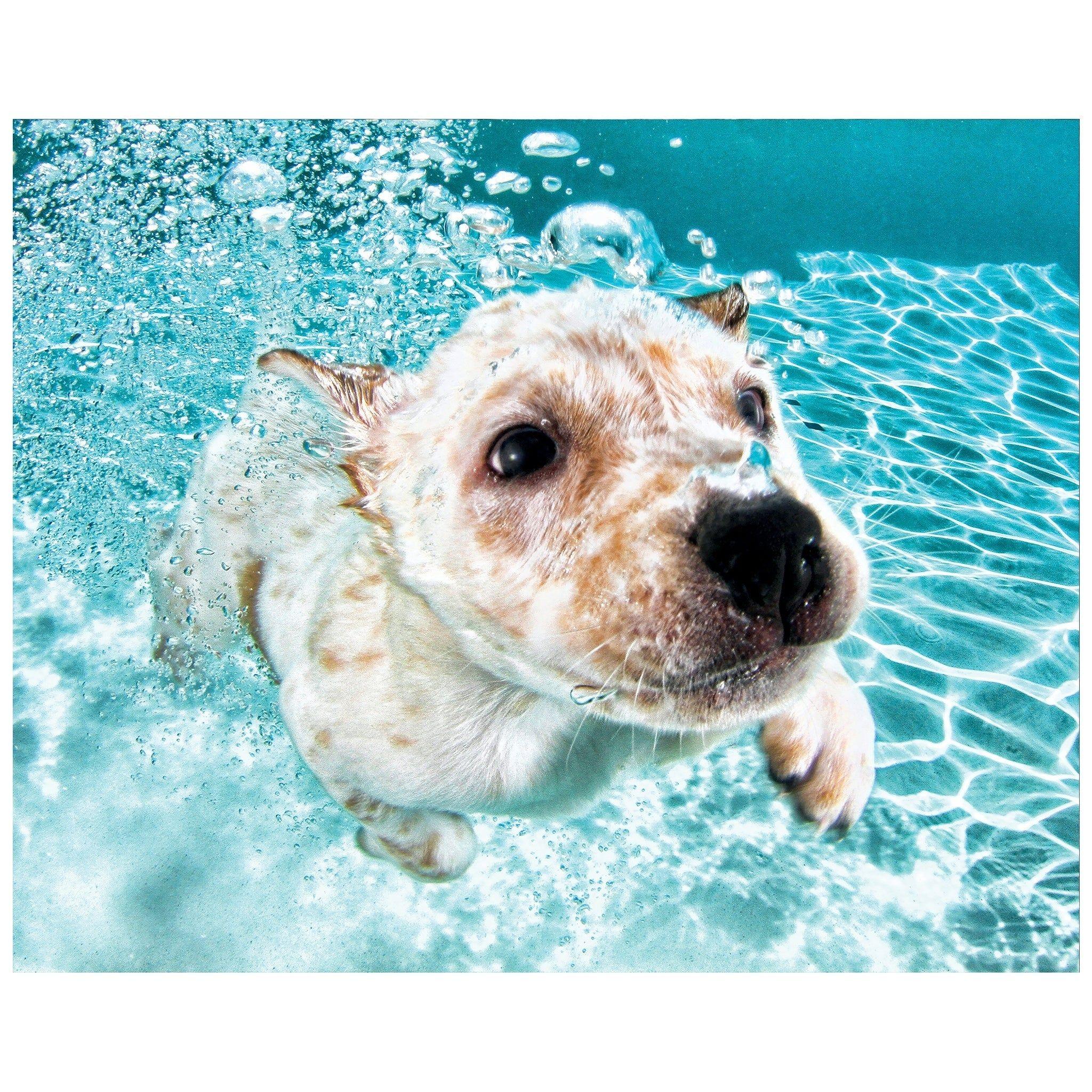 Labrador Retriever Dog Wall Art Unframed Free Floating Tempered