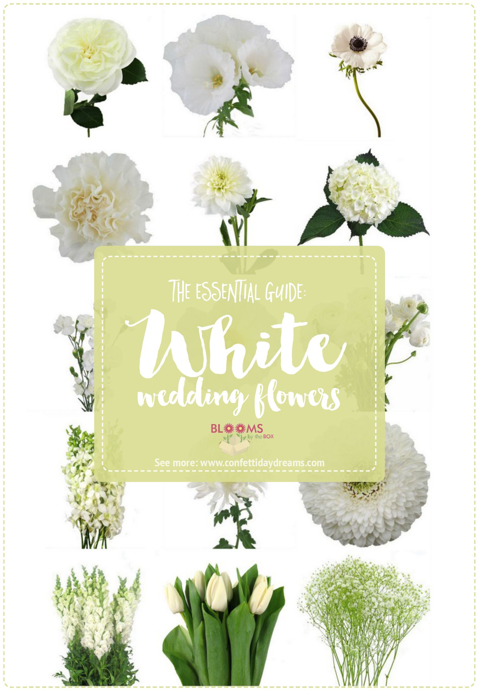 Essential white wedding flower guide names types pics save this in depth white wedding flower guide feat bloomsbythebox for names types mightylinksfo